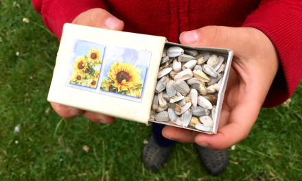 Kweken met de kids: Zaden verzamelen