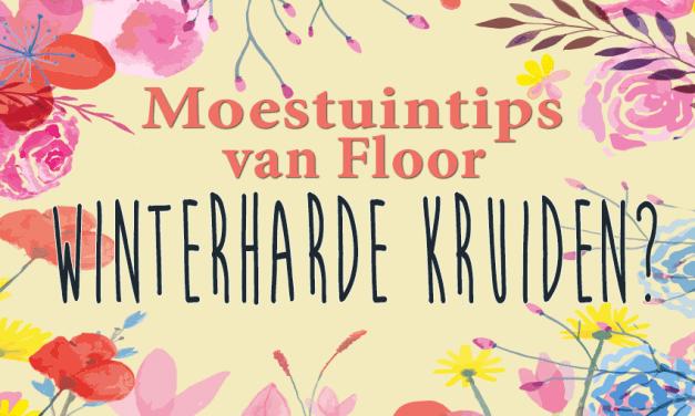 Moestuintips van Floor: Kruiden, winterhard of niet?