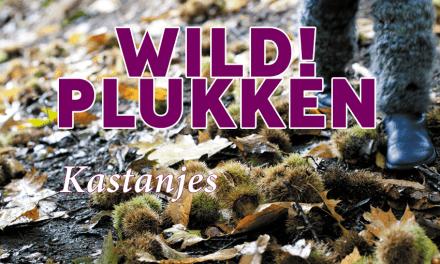 Wildplukken: Kastanjes
