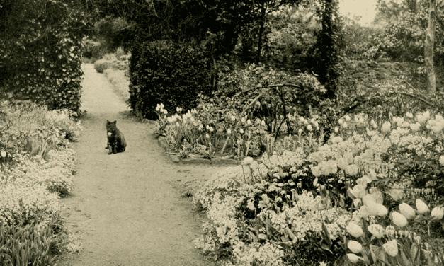 De kunst van tuinieren – GERTRUDE JEKYLL