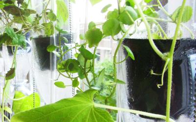 Tuin zonder grond: De raamtuin