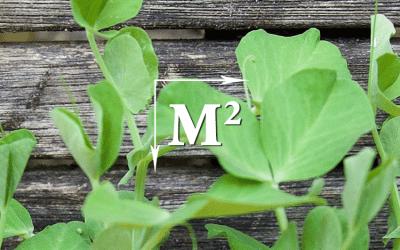 Vierkante-Meter-Tuin: Erwtenscheuten