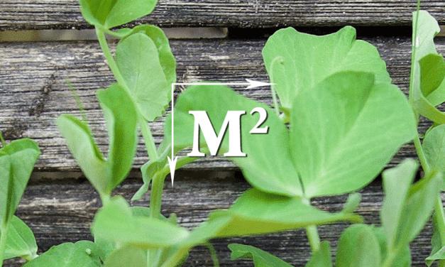 Vierkante Meter Tuin : Tuin aanleggen ong vierkante meter werkspot