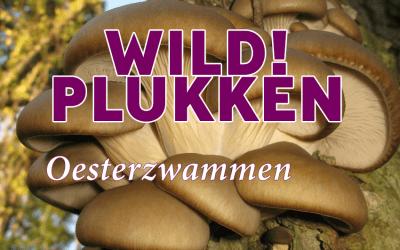 Wildplukken: Oesterzwammen