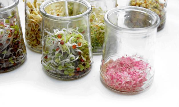 Kiemgroenten en Microgroenten – Supersnelle oogst