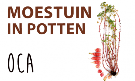 Moestuin in potten: Oca