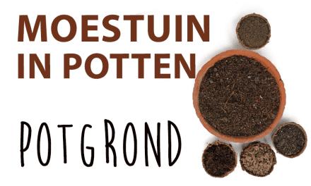 Moestuin in potten: Begin met goede potgrond