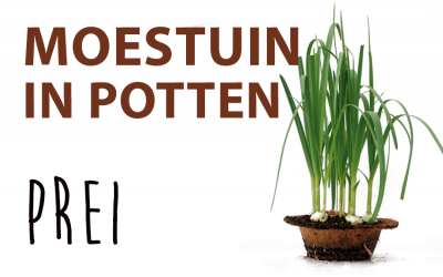 Moestuin in potten: Prei