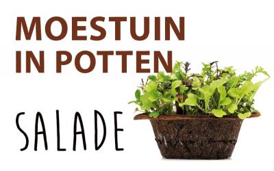 Moestuin in potten: Salade mixte
