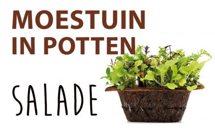 Moestuin in potten: Salade mixte