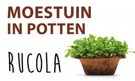 Moestuin in potten: Rucola