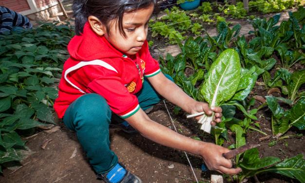 Boliviaanse schoolkinderen smikkelen van zelfverbouwde groenten