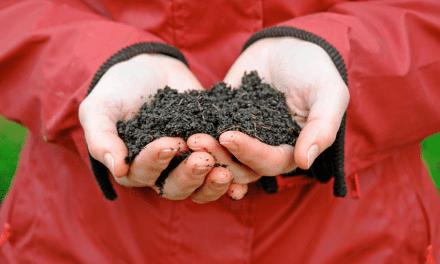 Groeivoeding: Plantaardige plantenvoeding