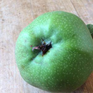 wormstekige-appel-1.JPG