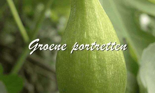 Groene portretten: Vijgen