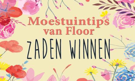 Moestuintips van Floor: Zaden winnen