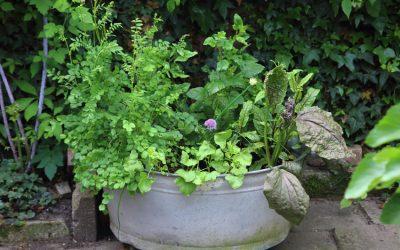 Polycultuur van vaste groenten en kruiden
