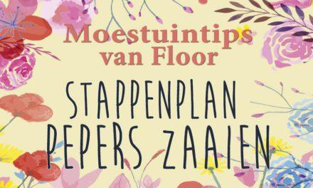 Moestuintips van Floor: Stappenplan pepers zaaien