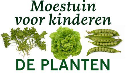Moestuin voor kinderen: De planten