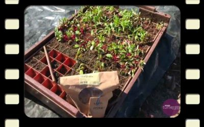 Vlog: De aardbeien en bieten kunnen naar buiten