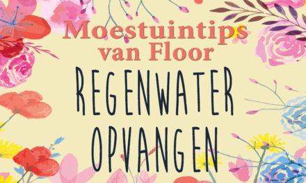 Moestuintips van Floor: Regenwater opvangen