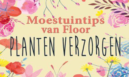 Moestuintips van Floor: Planten verzorgen