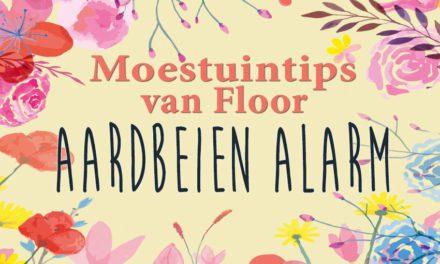 Moestuintips van Floor: Aardbeienalarm