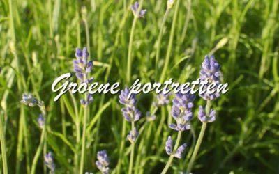 Groene portretten: Lavendel