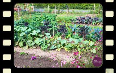 Vlog: De tuin in september