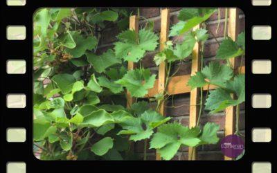 Vlog: Verticaal tuinieren
