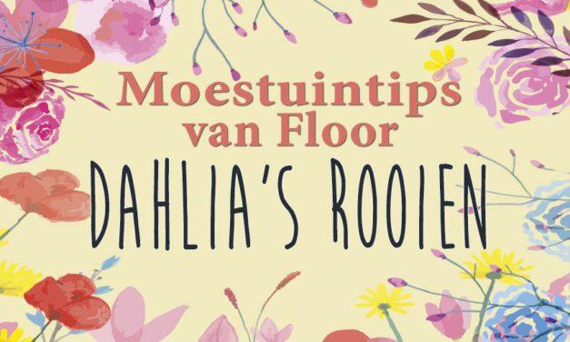 Moestuintips van Floor: Dahlia's rooien – stappenplan