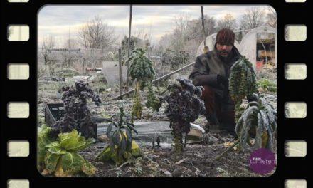 Oogsten in januari –  Palmkool, boerenkool en spruitkool – Vlog