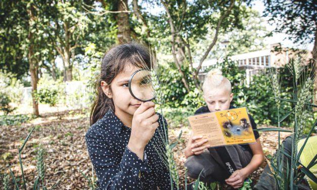 Tips voor een Groen schoolplein