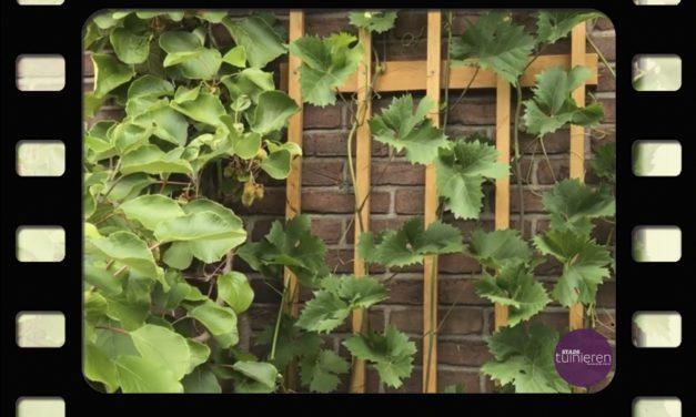 Verticaal tuinieren: Lei- en klimfruit- Vlog